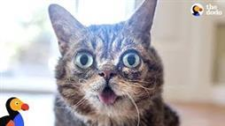 Lil' Bub Shows the World: 'Different Is Beautiful'