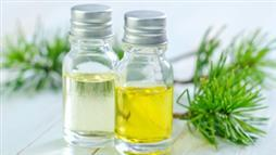 Spruce Oil: The Hormone-Mimicking Essential Oil