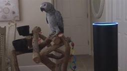 Parrot Orders 'Lights On' With Voice-Controlled Device