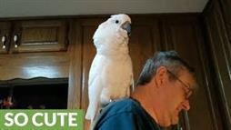Cockatoo Sings 'I Love You' Song