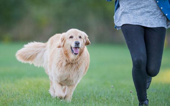 공원에서 개를 산책하는 중
