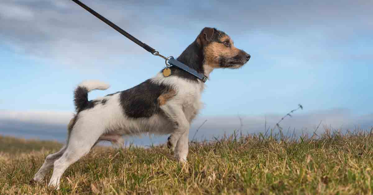 Image result for dogs on leashes