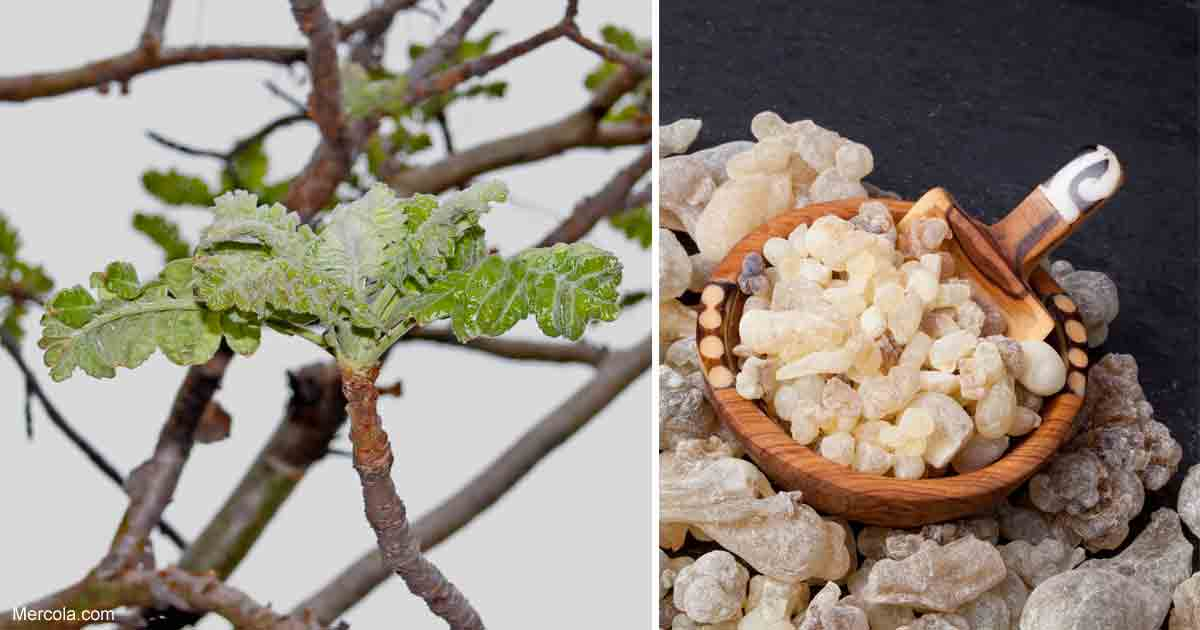Boswellia: Bank on This Herb for Better Health