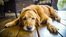 Your Pet's Aging Symptoms: Are They Cognitive or Medical?