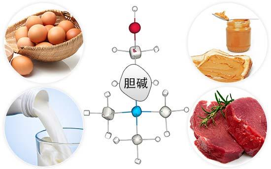 胆碱的最佳膳食来源