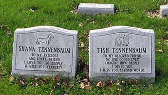 宠物的坟墓