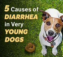 Diarrhea in Very Young Dogs