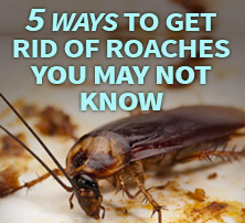 Ways to Get Rid of Roaches