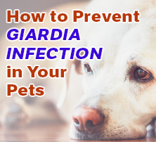 How to Prevent Giardia Infection in Your Pets