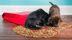 high protein pet food