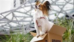 The 6,000 Dogs 'Working' at Amazon Get Access to Some Cool Perks