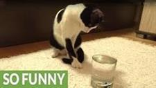 Kitty�s Mind Blown by Sparkling Water