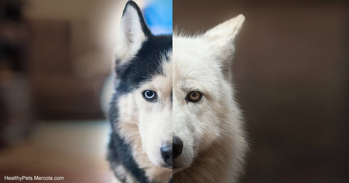 Why Wolves and Dogs Should Never, Ever Be Bred
