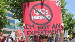 Monsanto, podrá correr pero no esconderse