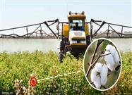 An Unapproved, Genetically Modified Cotton Seed Is Being Planted Across India