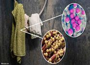 Another Source of Foodborne Disease to Consider: Kitchen Towels