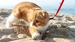 Kitty 'Digs' the Sea Shore