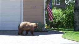 Chance Encounter: Bear and Human