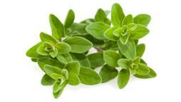 Simple Tips in Growing Marjoram