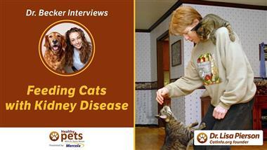 A Feline Expert Shares Her Dos and Don'ts for Caring for Cats With Kidney Disease