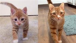 Cole and Marmalade: From Kittens to Cats