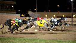 Floridians to Vote on Greyhound Racing Ban