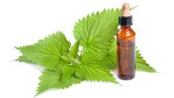 Nettle Oil: More Than Just a Backyard Weed