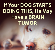 Dog Brain Tumor