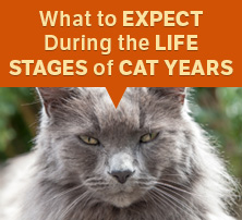 Life Stages of Cat Years