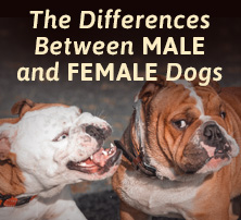 Male and Female Dogs