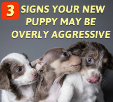Overly Aggressive Puppies