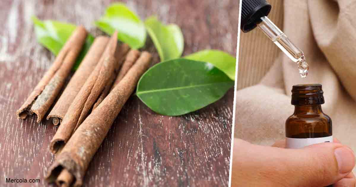 Cinnamon Leaf Oil Benefits and Uses