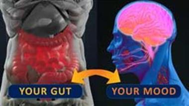 conexion intestino cerebro
