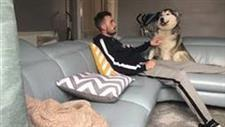 Husky Named Millie Just Loves Attention