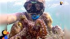 Diver Meets a Baby Octopus and Names Him Egbert