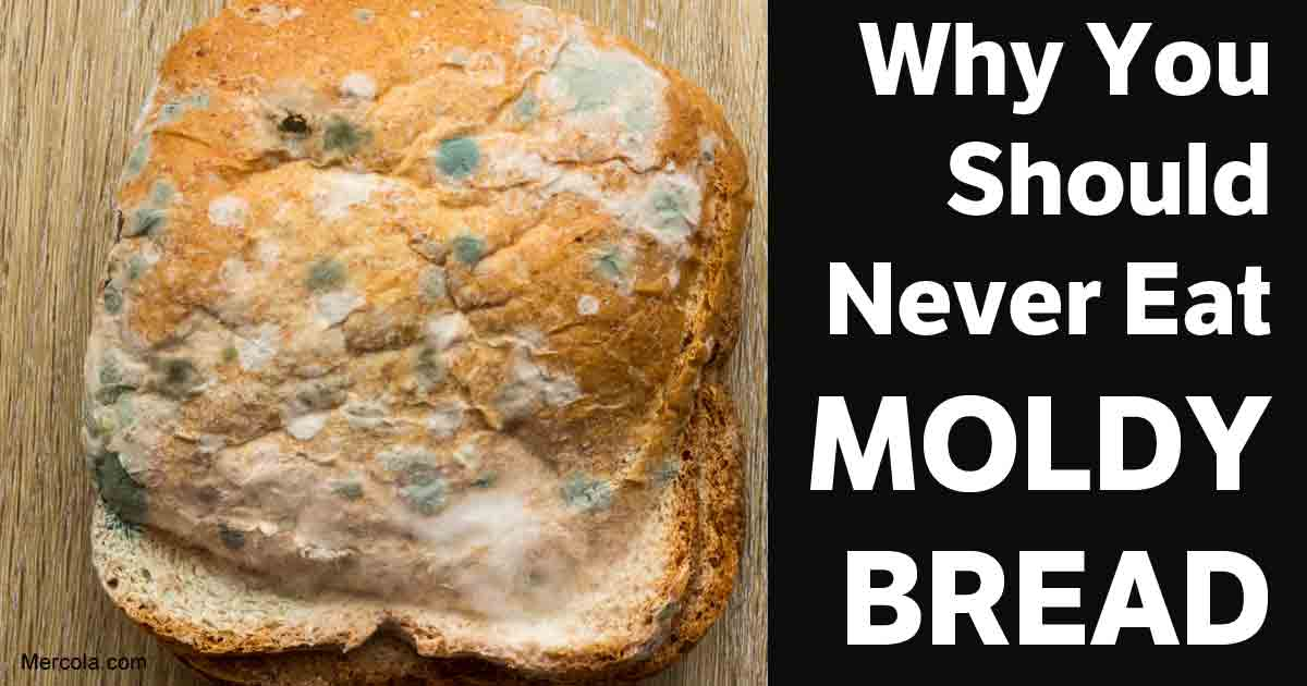 Here's Why You Don't Ever Want to Eat Moldy Bread