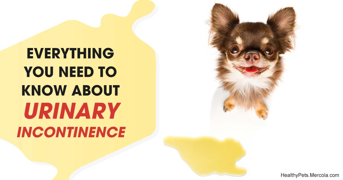 What's Causing Your Dog's Incontinence
