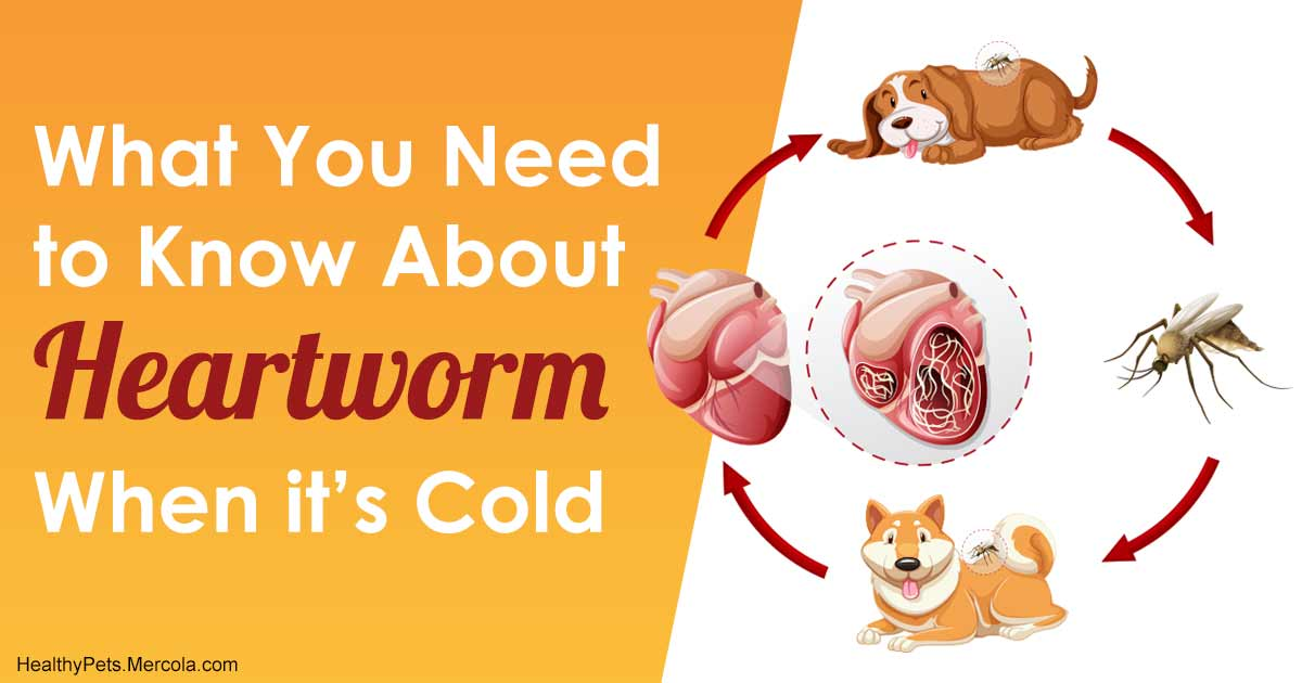 Say No To Year Round Heartworm Preventives Until You Know This