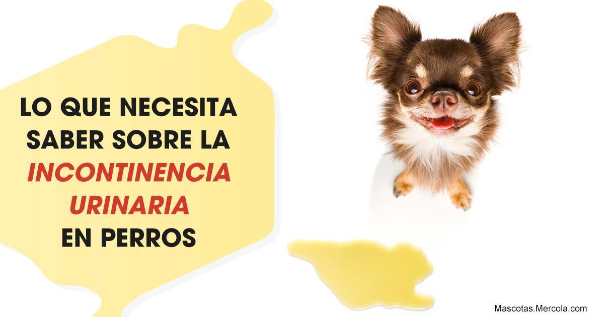 remedios para incontinencia urinaria en perros