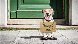 Adopting a Pet May Help Fight Depression