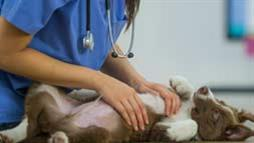 antibiotic resistant infections in pets