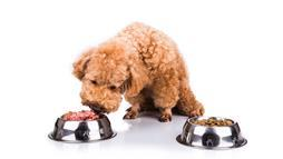 New Dog Feeding Study — Can You Guess Their Crazy Conclusion?