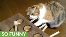 Cat Tries to Figure Out the Secret to Whack-a-Mole