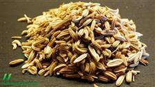 Fennel Seeds Are a Potent Booster of Nitric Oxide