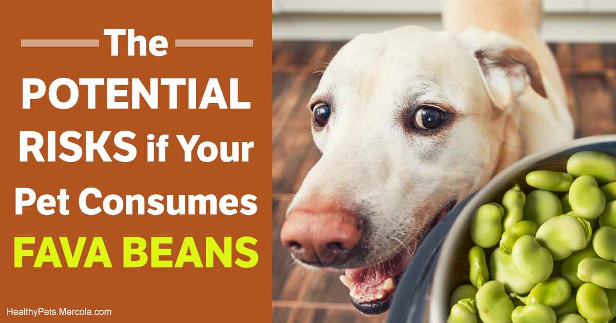 Beans, Peas and Lentils: Why They Don't Belong in Your Pet's Bowl