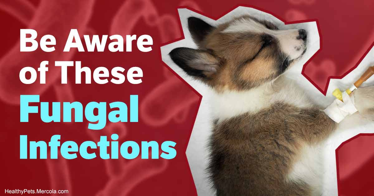 Is Your Pet Exposed to Any of These Deadly Fungal Threats?