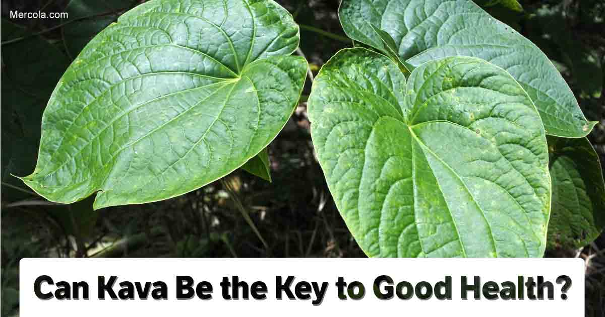 Kava: Benefits, Uses and Recipes