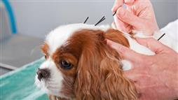 Stuns Veterinarians, Relieves Pain Without Side Effects