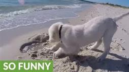 Dog Is Sad After Digging Hole Too Close to the Ocean