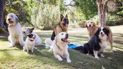 What This 90,000-Dog Study Reveals About Purebred Versus Mixed Breed Health